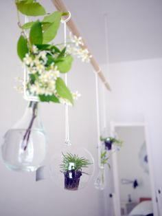 DIY green installation with plants by projectorium.pl
