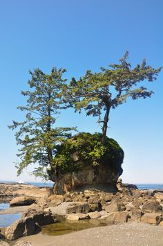 View on West Coast Trail (Vancouver Island, BC) by Paula Reedyk