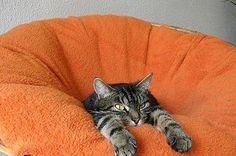 落ちる〜。 猫ベッドじゃないにゃ!  #neko #cat