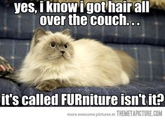 Yes, I know I got hair all over the couch. It's called FURniture, isn't it? #cats #funny #pictures