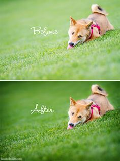 Bringing Back Color, Detail and Richness in Your Photos with Photoshop - Beautiful Beasties Pet Photography Educational Resources