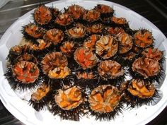 Eat a sea urchin fresh from the water in Sardinia.