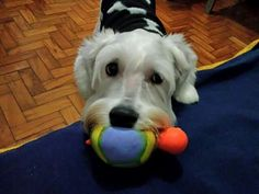 Let is play???