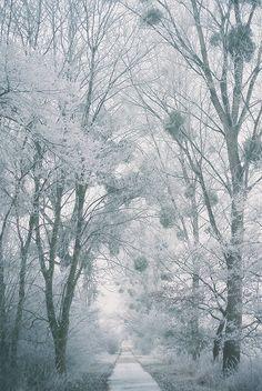 """Frozen World"" by stephanlo1 on Flickr."