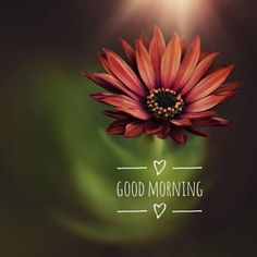 Good Morning Monday Images, Good Morning Image Quotes, Morning Quotes Images, Good Morning Images Download, Morning Thoughts, Good Morning Messages, Good Morning Greetings, Good Morning Good Night, Good Morning Beautiful Pictures