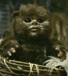 Ewok baby