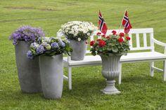 Campanula, hortensia, margeritt og pelargonia i fiberclay potter fra Mester Grønn https://www.mestergronn.no/