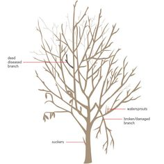 How to prune fruit trees in three simple steps