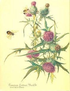 edith holden art | posted by pamela ayres at 12 36 pm labels botanical illustration ...