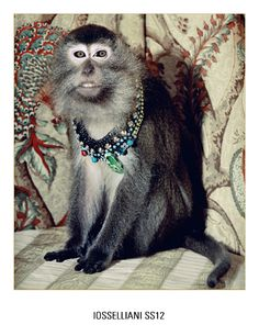 Ioselliani Jewelry Ads  Two of my favorite things together - monkeys and jewelry!