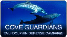 Cove Guardians. Please spread the world by sharing our URL widely: http://livestream.seashepherd.org.