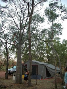 Tent Camping and the Kids Up A Tree from Starling Fitness
