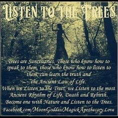 I have always loved trees.you can feel their wisdom and energy.they have been growing and standing for so long.Through Witchy Eyes - Pinned by The Mystics Emporium on Etsy Witch Quotes, Pagan Quotes, Wicca Witchcraft, Magick Book, Eclectic Witch, Book Of Shadows, Mother Earth, Mother Nature, Occult