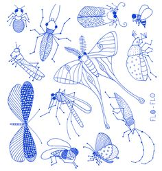 Florence Boudet - FLO-FLO - insect - cockroach - blue - moth - bee - ant -  electric - butterfly - antennaes - mosquito - beatle - drawing -...