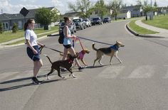Dogs Take Us Walking               Many good habits can be difficult or unpleasant to carry out, but that's certainly not true of all o...