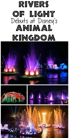 Rivers of Light Disney Animal Kingdom is a new nighttime show featuring water, fire, and light! It brings magic to Animal Kingdom after dark!