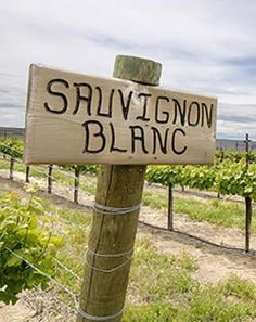 Featured grape variety: Sauvignon Blanc, a green-skinned grape originating from the Bordeaux region of France. A crisp, dry, white wine. Sauvignon Blanc, White Wine, Wines, Crisp, France, Outdoor Decor, Green, White Wines, French