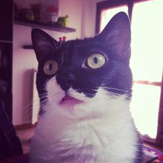 Tabatha è ipnotizzata!!!! #gatto #cat #cats #catsagram #catstagram #instagood #kitten #kitty #kittens #pet #pets #animal #animals #petstagram #petsagram #photooftheday #catsofinstagram #ilovemycat #instagramcats #nature #catoftheday #lovecats #furry #sleeping #lovekittens #adorable #catlover #instacat