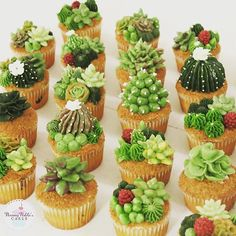 25 ideas for succulent cake frosting Kaktus Cupcakes, Succulent Cupcakes, Flower Cupcakes, Cupcake Icing, Cupcake Cookies, Bolo Floral, Cactus Cake, Delicious Desserts, Dessert Recipes