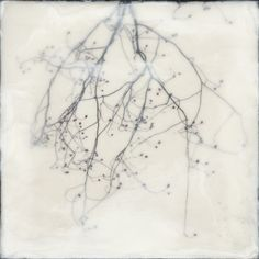 Shoshannah White: Hanging Maple,  2012 - photographic prints with encaustic medium and oil paint