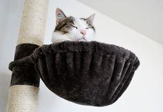 Ich kanns nur noch ca. 1000 Mal wiederholen: ich möchte unbedingt auch mal Katze sein! Das hier ist Fräulein Smilla, die bei Susanne lebt.