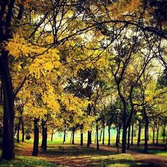Parco antistante sede Regione Emilia Romagna,  instagram, foto di @michelazingone http://instagr.am/p/SAtiX8B5AX/