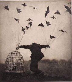weighted by birds
