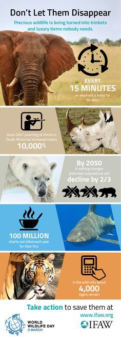 Be a part of #saving these #animals from disappearing. Go, #volunteer!
