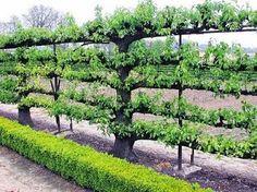 Alimentação saudável e hortas organicas !   Health eating and organic vegetable gardens.