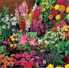 Many bulbs bloom with small flowers and should be planted in groups or beds. Summer Flowers To Plant, Summer Flowering Bulbs, Planting Flowers, Small Flowers, Flower Beds, Garden Tools, Bloom, Leaves, Landscape