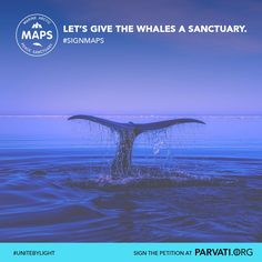 Did you know many whales depend on the the Arctic Ocean for survival? With the melting ice and increased interest in Arctic oil and exploitation, this unique ecosystem is under threat like never before. Protect it. Sign and share widely the Marine Arctic Peace Sanctuary (MAPS) petition at Parvati.org.
