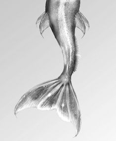 fish tail. now if i were a mermaid, this is the tail i'd want from the spring/summer 2014 la mer haute couture collection. ;p