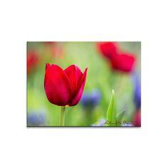 Blumenbild auf Leinwand, als Kunstdruck oder Fototapete Tulpen im Morgenlicht