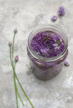 The Best Ways To Preserve Chives Shown: Chive Blossom Vinegar Herb Gardening 101 Garlic Chives, Fresh Chives, Chive Flowers Recipe, Preserve Fresh Herbs, Chive Blossom, Canning Food Preservation, Preserving Food, White Wine Vinegar, Plants