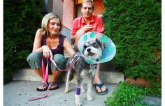 Injured dog makes beeline for Civic& emergency department after attack (with video) Emergency Department, Pet Health, Health And Safety, Ottawa, Yorkie, Paramedics, Miniature Schnauzer, Local News, Dogs