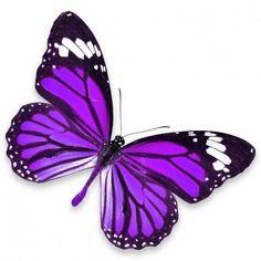 sticker-mural-papillon-violet.jpg (600×600)