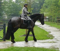 frisian and rider baroque in the rain 02 by ~Nexu4 on deviantART