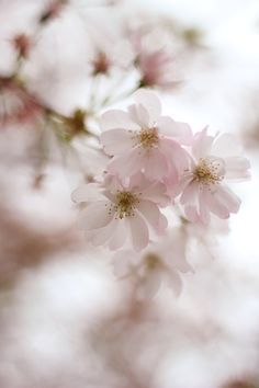 Every new beginning comes from some other beginning's end. - Seneca #Spring