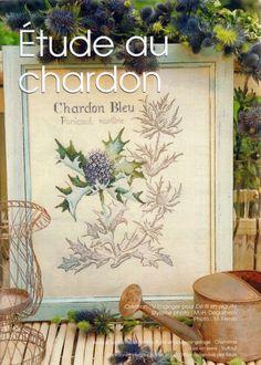 chardon bleu  1