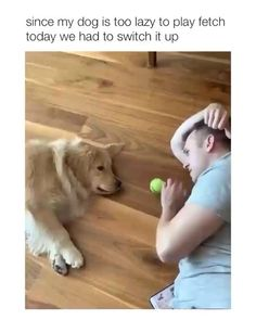 Animal Jokes, Funny Animal Memes, Dog Memes, Funny Dogs, Funny Humor, Cute Little Animals, Cute Funny Animals, Funny Cute, Cute Animal Videos