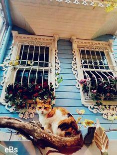 Tarihi Anadolu Evleri Kuzguncuk Üsküdar İSTANBUL34 #eBs1903 #anadolu #ahşapevler #taşevler #konak #köşk #architecture #restoranyon #vintage #history #city #travel #cat #marmara #üsküdar #kızkulesi #istanbul #türkiye Magical Home, Turkey Travel, Istanbul Turkey, Pretty Cats, Holiday Travel, Bird Houses, The Good Place, Vintage Rugs, Dog Cat