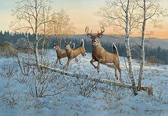 A925864565:On the Move II-Whitetail Deer; Weirs
