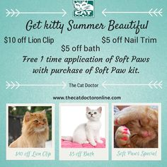Cat Summer beauty package at The Cat Doctor.  www.thecatdoctoronline.com #catgrooming #felinecare