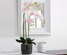 Blushing as prettily as a Victorian heroine, our pink moth orchid makes a delightful change from the classic white variety. Pink Moth, Moth Orchid, Ikea Pc Desk, Pretty Flowers, Silk Flowers, Period Living, Pink Orchids, Table Signs, Indoor Plants