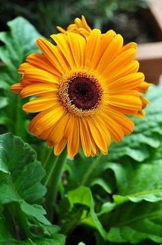Lyn A. - Google+ daisy