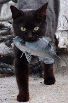 black cat gone fishing