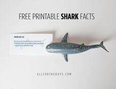 PRINTABLE SHARK FACTS All for the Boys - Free printable shark facts. Great for shark week!All for the Boys - Free printable shark facts. Great for shark week! Shark Facts, Ocean Party, Beach Party, Under The Sea Party, Baby Shark, Boy Birthday, Birthday Ideas, Birthday Parties, Free Printables