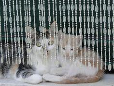 Pelekas, 2 van de vele katten