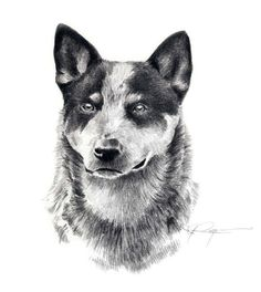 Hey, I found this really awesome Etsy listing at https://www.etsy.com/listing/11365056/australian-cattle-dog-art-print-signed