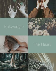 Ilvermorny: Pukwudgie...  Named by the No-Maj James Steward after the magical creature which befriended and protected Isolt Sayre. Pukwudgie house represents the heart.